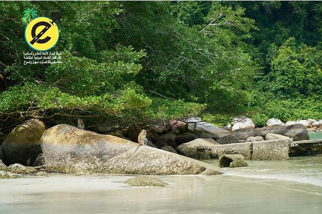 اجمل الوجهات السياحية لقضاء شهر العسل في ماليزيا