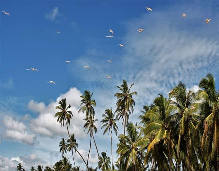 برنامج سياحي الي سريلانكا لمدة 20 يوم